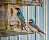 Swallow House Inspection DSCN54144