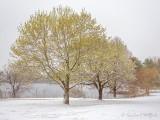 20210421 Snowfall In Lower Reach Park DSCN55002