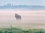 Horse Running In Ground Fog P1600015
