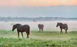 Ground Fog Beyond Horses P1600038