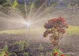 Flower Bed Sprinkler DSCN60895-7