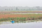 Kayaker In The Swale DSCN61524