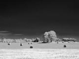 Bales In Pseudo-IR Landscape DSCN65231