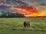 Equine Pal At Sunrise DSCN65864