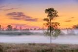 Ground Fog Beyond Lone Tree 90D-00646