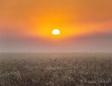 Foggy Sunrise 90D-01720