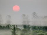 Red Sun Rising Through Ground Fog P1060567