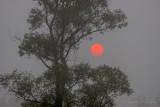 Red Sun Rising Through Fog 90D-02511