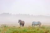 Ground Fog Beyond Horses 90D-02561