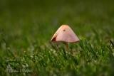 Lone Mushroom DSCN68194-6