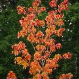 Summer Autumn Color DSCN69193