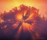 Sunrise Sunrays 90D04913