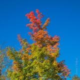 Autumn Color DSCN70894