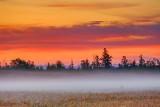 Sunrise Color Beyond Ground Fog 90D05215