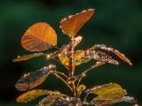 Wet Leaves DSCN70772