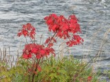 Early Fall Foliage DSCN72106
