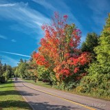 Early Fall Foliage DSCN73121