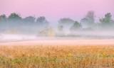 Ground Fog At Sunrise 90D06420
