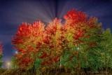 Autumn Trees At Night 90D06505-9