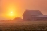 Barn In Sunrise Fog 90D06670