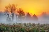 Ground Fog At Sunrise 90D07084-8