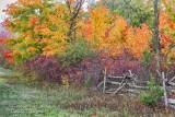 Autumn Split Rail Fence 90D07029