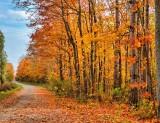 Autumn Backroad DSCN74082