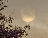 Clouded Sun DSCN74553