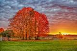 Autumn Trees At Sunrise 90D07906-10