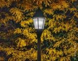 Autumn Park Lamp At Night 90D07522-30