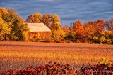 Autumn Barn At Sunrise 90D07323