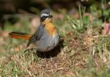Birds of Kenya