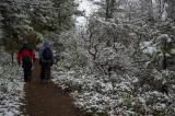 Mariposa Grove Trail
