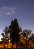 Bright Venus