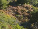 Turning Hillside