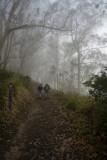 Foggy, not smoky