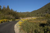 hike to the Upper Lehman Creek Campgrounds