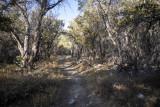 On the Lehman Creek Trail