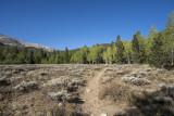 A flat spot on the Lehman Creek Trail