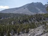 On the trail to the Bristle Cones Grove