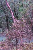 Un-naturally pink