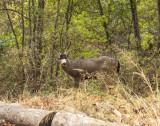 A Buck