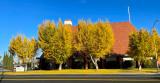 Autumn Ginko Trees