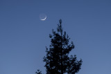 The Young Moon and Mercury