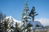 Tea Cup Lake Cross Country Ski outing