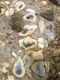 Cape Kiwanda Sandstone