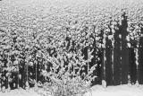 New snow.jpg