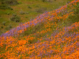 CHSP Wildflowers