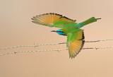 song birds.