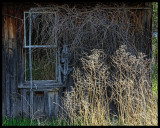 Tangled & Abandoned